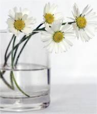emozioni-fiori